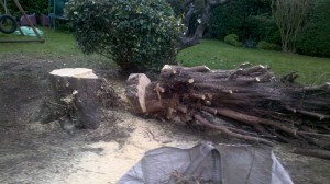 Tree removal and logging nottingham