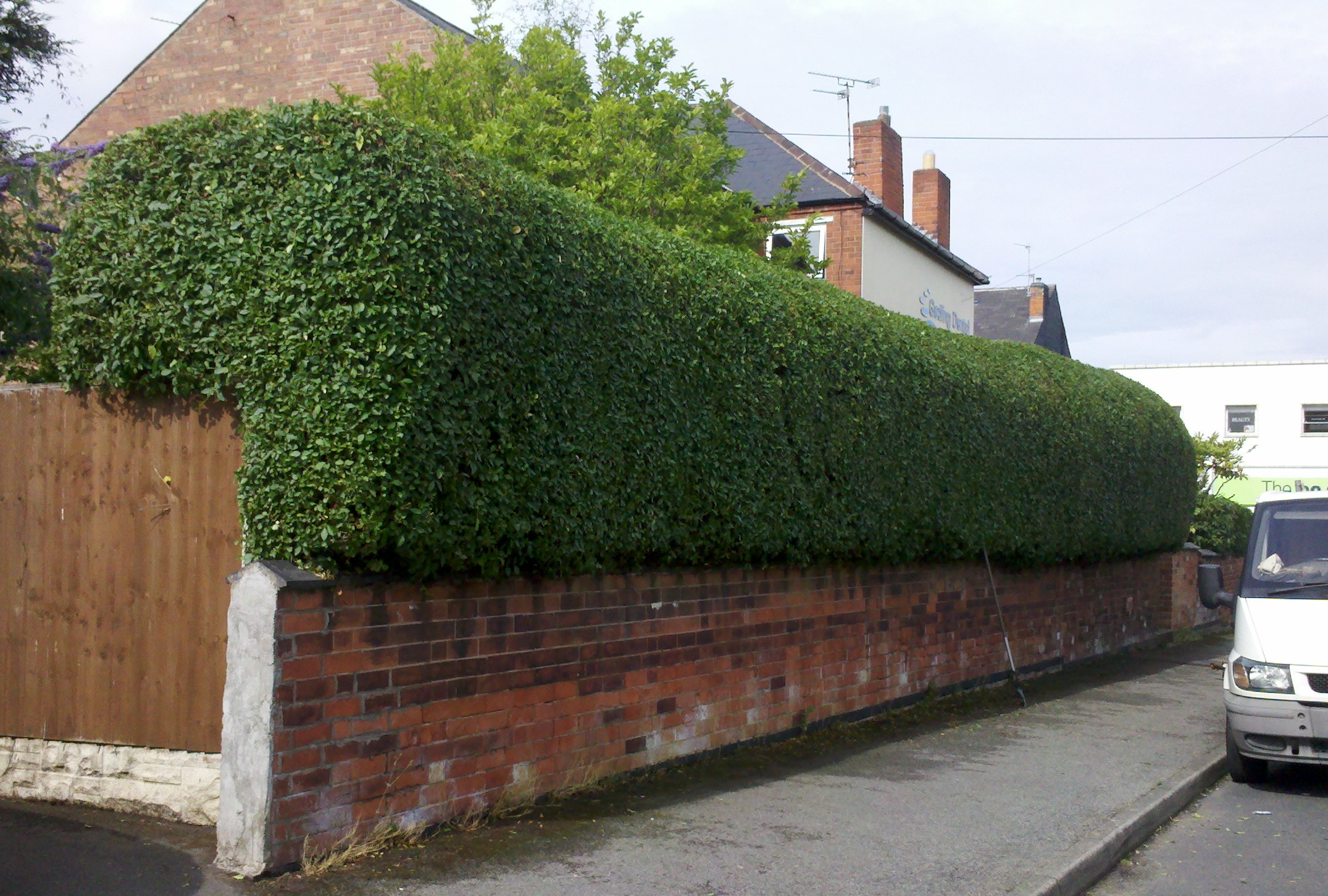 How to Remove a Privet Hedge forecasting